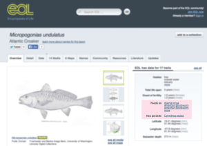EOL's Atlantic Croaker species page with the GloBI data elements highlighted in pink.